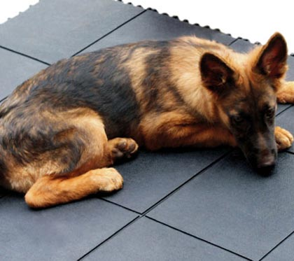 Pedane In Plastica Per Cani.Tappeti In Gomma Badifarm
