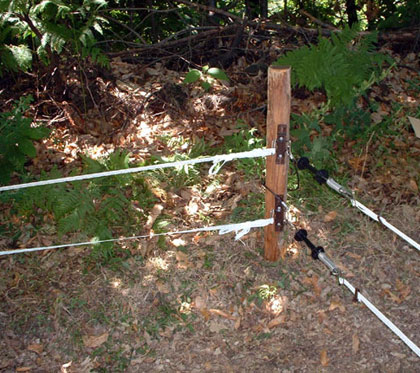 Badi_farm_electric_tape_band_fence_wild_animals_wildboards_boar_protect_intrusion_antiboar